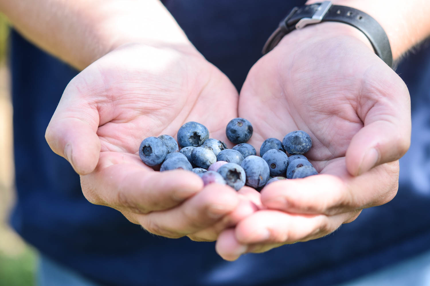 5 things I learned from joining a CSA this summer, blueberries, you pick