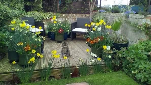 Jasmine, the real garden owner surveying her estate