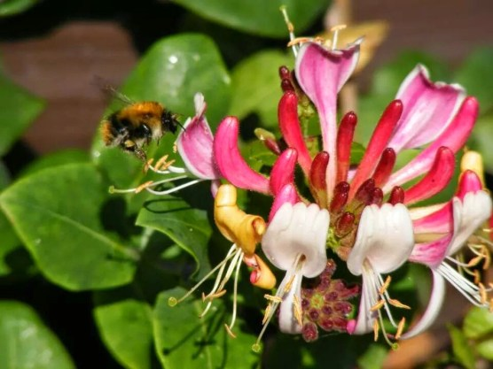 The sound of bees, and the scent of honeysuckle...
