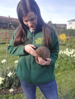 Meet our new hedgehogs