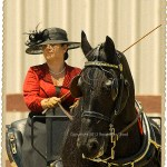 Friesian horse with cart and driver
