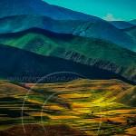 Qinghai provence canola fields