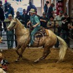 a palomino horse spins on his hindquarters