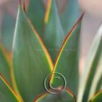 a succulent plant up close. unprocessed