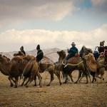 Kazakh men ride Bactrian camels