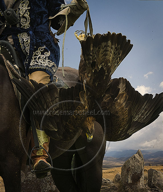 Kazakhstan eagle hunter with eagle