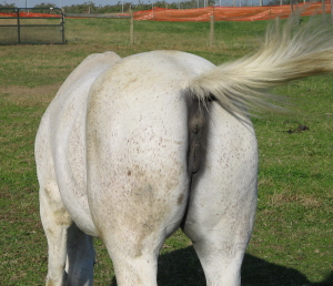 Image result for A Horses ass picture