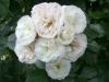 Bouquet-Parfait®