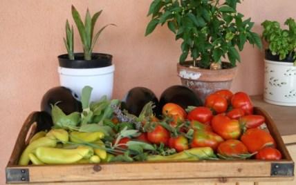 Légumes potager provençal