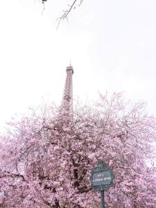 paris sorties rose philange