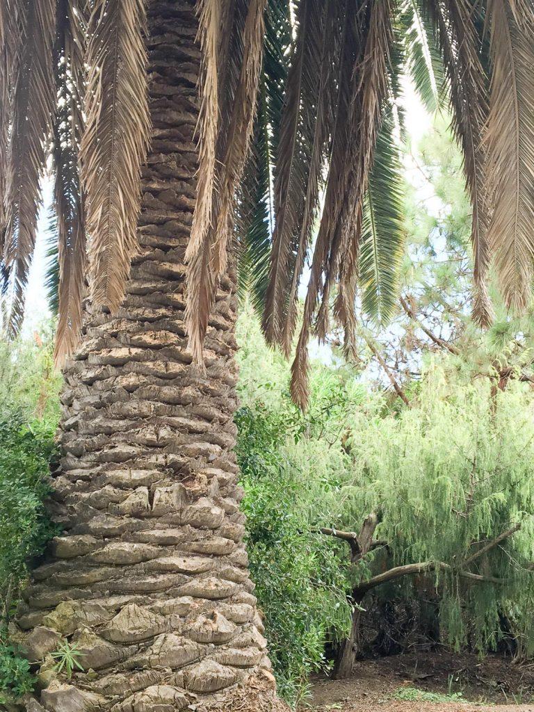 free_visit_Canario_garden