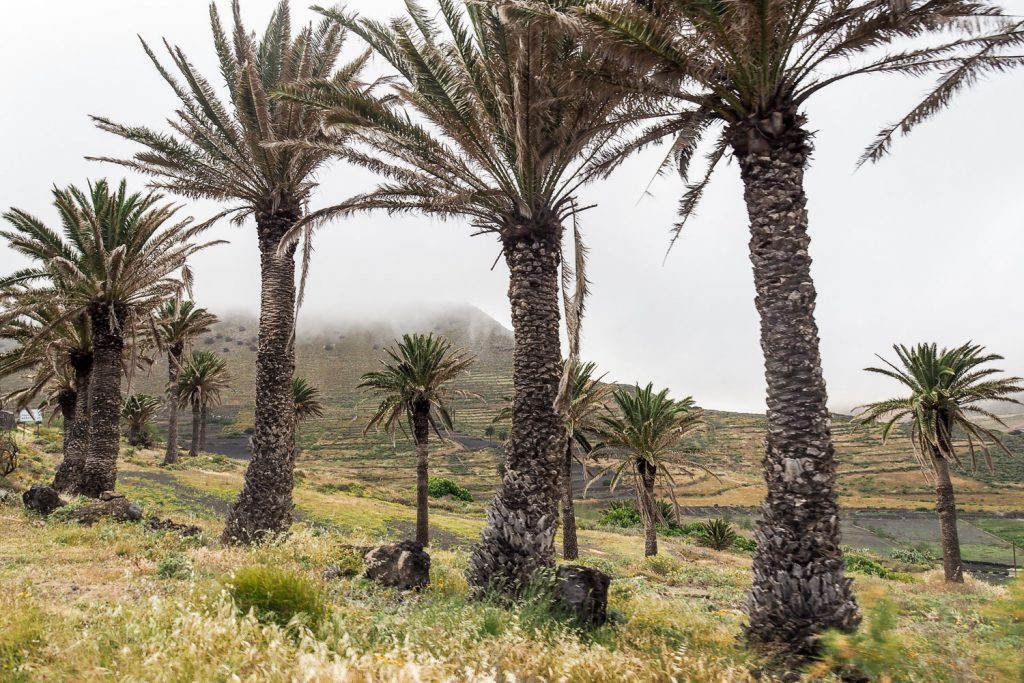 Rosesinparis_valley_thousand_palm_trees_site