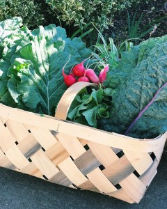 a basket full of green vegetables and red radishes