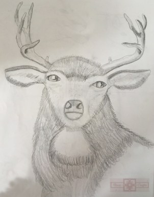 Rosie Crafts Deer Drawing