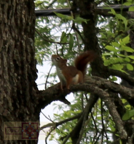Rosie Crafts Red Squirrel Photography