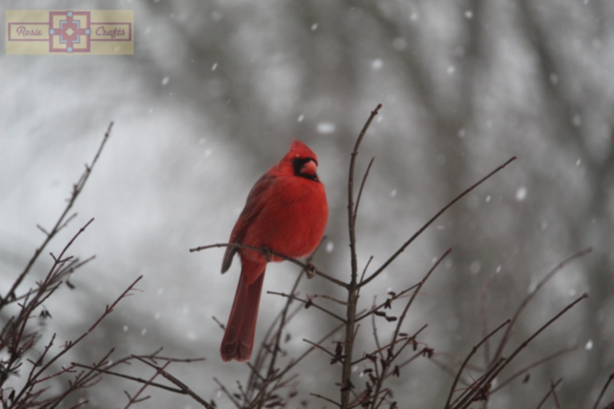 Rosie Crafts Male Cardinal Perched on Berry Bush In Snowy Winter Photography
