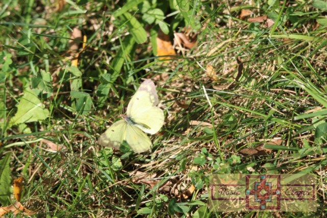 Rosie Crafts Yellow Black Butterfly/Moth Photography