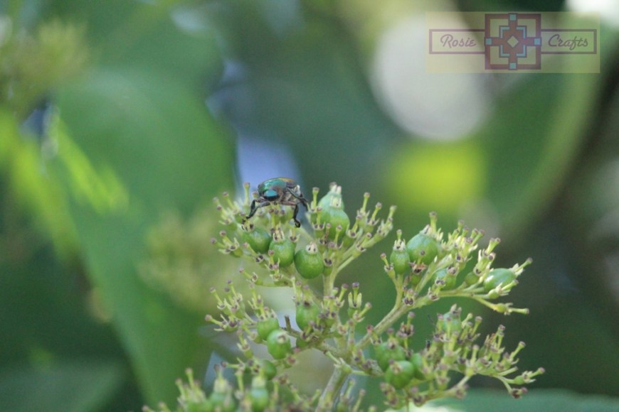 Rosie Crafts Beetle On Plant Photography