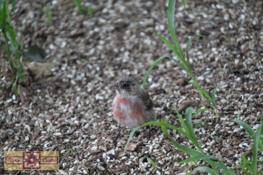 Rosie Crafts Young Finch Bird Photography