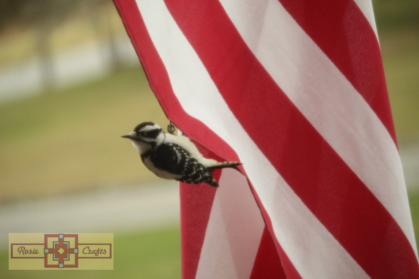 Rosie Crafts U.S.A. Patriotic Downy Woodpecker Photography