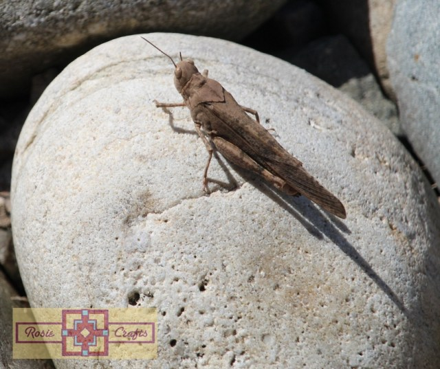 Rosie Crafts Locust On Rock Photography