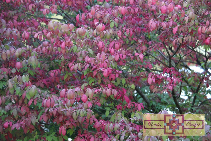 Rosie Crafts Fall Foliage Berry Tree Photography