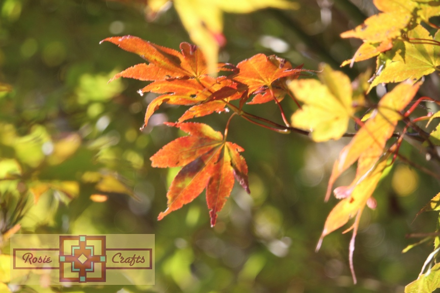 Rosie Crafts Autumn Leaves Photography