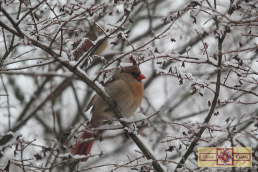 Rosie Crafts Female Cardinal Perched on Winter White Snowy Berry Bush Photography