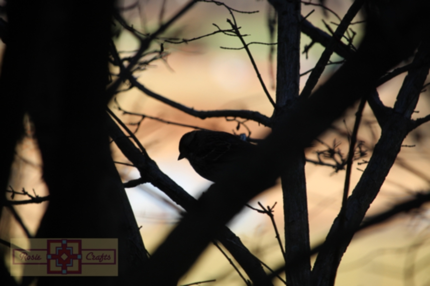 Rosie Crafts Silhouette Bird Photography Imagery