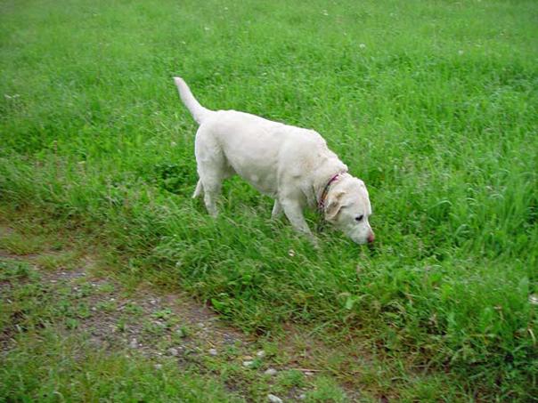 Tasha Testing the Territory
