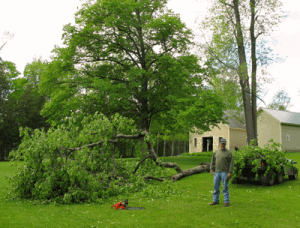 Doug Decker cleans up ancient crab apple tree after hail storm hits Rosslyn on May, 16, 2012.