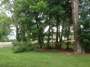 Limb split from locust tree during thunderstorm