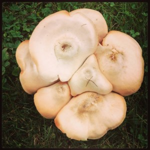 A mystery mushroom clump has sprouted in Rosslyn's back meadow.