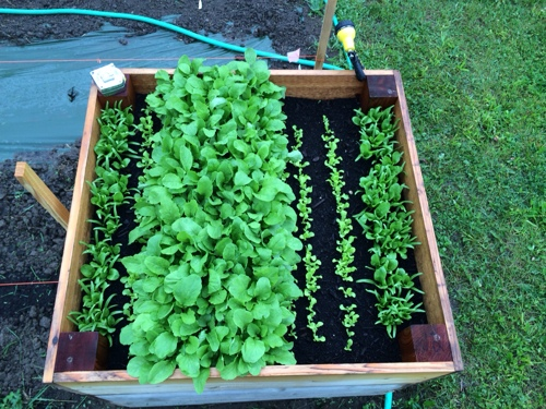 Garden Update: Soggy Friday the 13th - Rosslyn ReduxRosslyn Redux