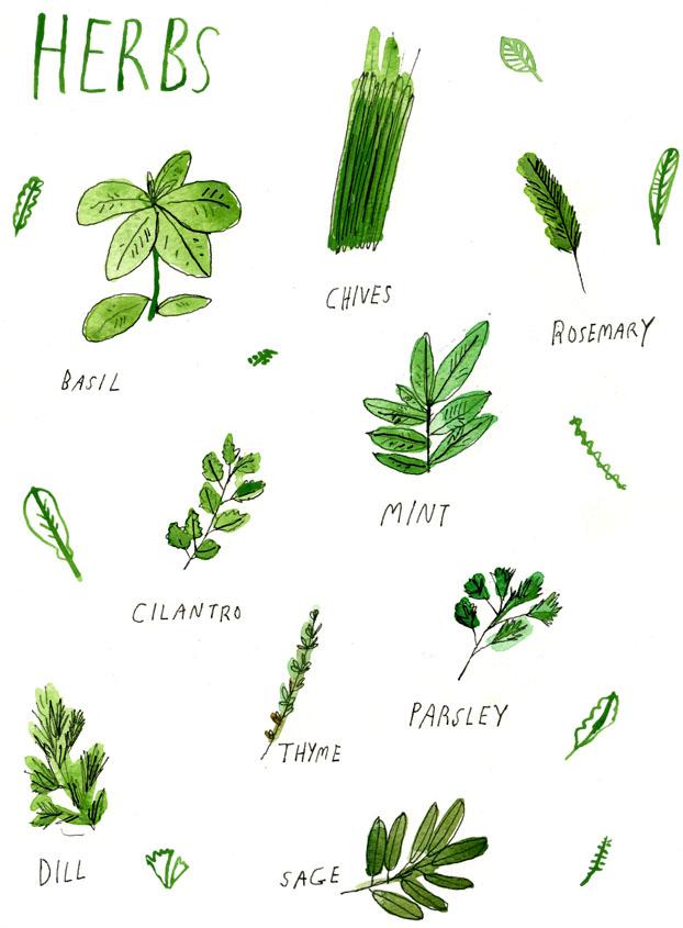 Herbs, by Elizabeth Graeber