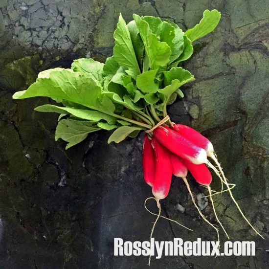 French Breakfast Radishes: The peppery-but-sweet taste of spring.