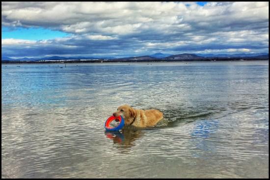 "February Swim: Griffin ""polar bear plunging"" in late February 2017. (Source: Geo Davis)"