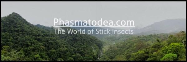 Phasmatodea.com is the world's leading website about phasmids. (Source: Phasmatodea.com)