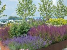 Deichgärten und im Hintergrund die zwei Brücken