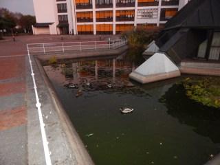 Die Enten vom Landratsamt