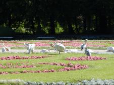Tierpark Berlin - Pelikane