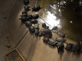 Tierpark Berlin - Schildkröte