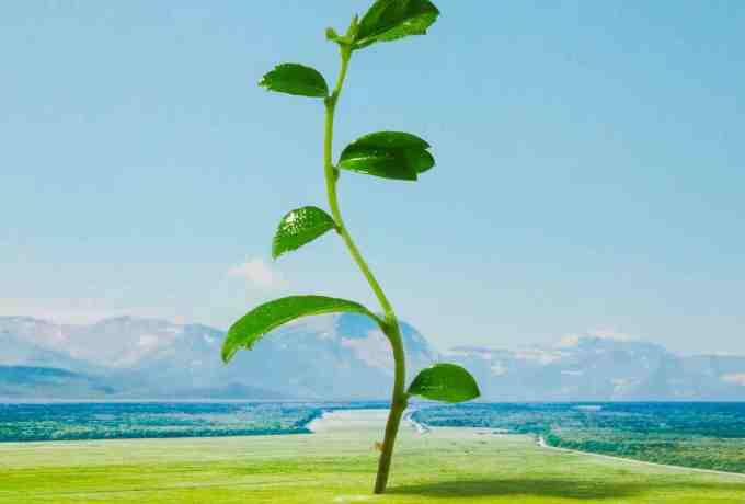 習慣的種子發芽