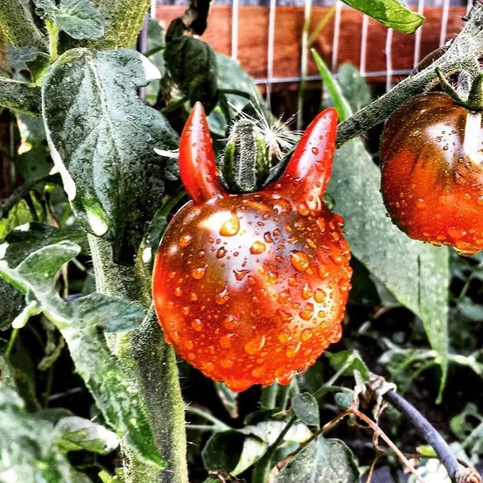 Frutas e vegetais estranhamente moldados