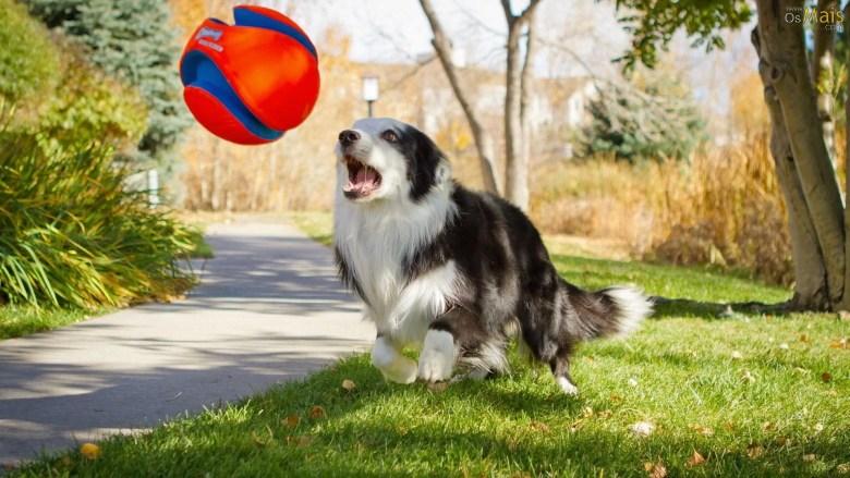 O engraçado comportamento dos cachorros