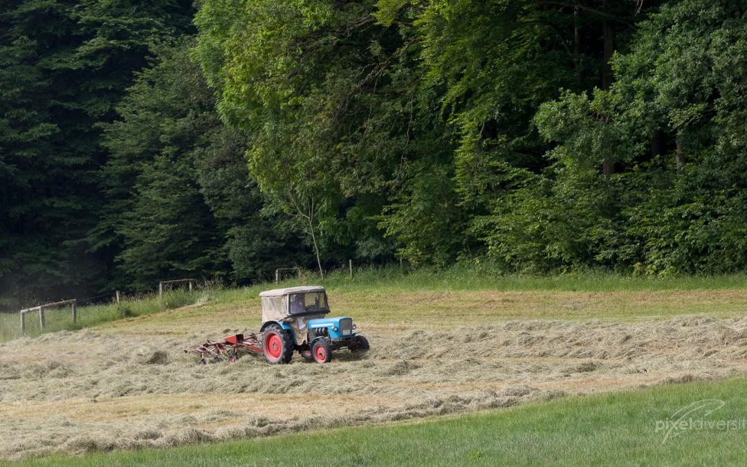 Landwirt beim Heuwenden. Schon wenn die Landwirt die Felder anfahren, folgen die Rotmilane, um sich ihre Nahrungsanteil abzugreifen. © S. Rösner
