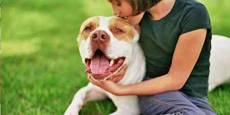 Strongest Dog Bites