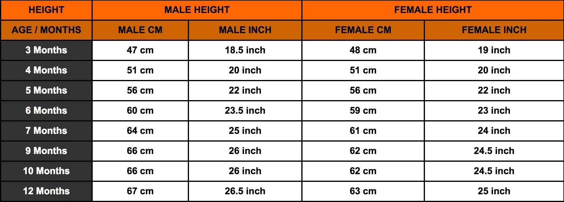 Rottweiler growth chart rottweiler height chart rottweiler weight