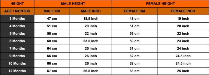 ROTTWEILER HEIGHT CHART