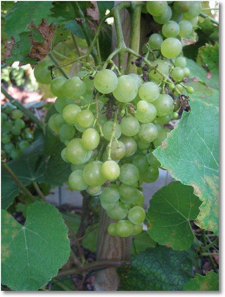 20090830 Wein im Garten 003